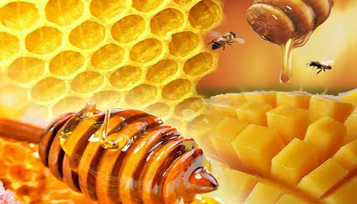 cara budidaya lebah madu