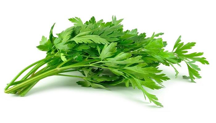 cara menanam daun seledri