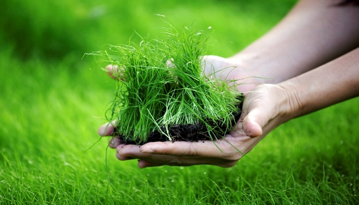 hand holding green grass background.